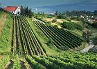 5 pomys��w na podr� po w�gierskich winnicach