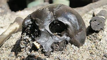 Czaszka jednej z ofiar bitwy w Alken Enge