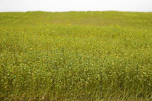 Ziemia rolna hitem dekady. Zysk: 287 proc. w 10 lat