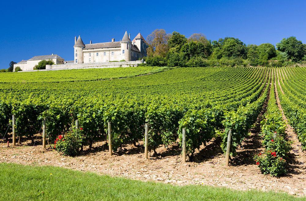 Winnice nad Loarą, Francja