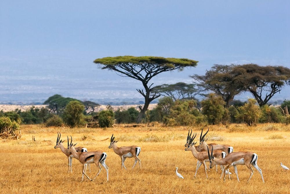 Kenia, Afryka