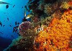 Dzika przyroda Europy - podwodny �wiat / fot. Animal Planet
