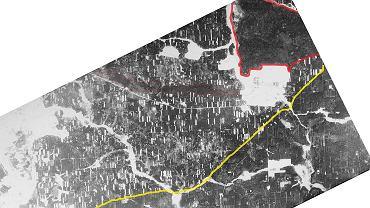 Zdjęcie Puszczy Białowieskiej zrobione w grudniu 1961 roku przez amerykańskiego satelitę szpiegowskiego. Na żółto - granica państwa. Na czerwono - granica parku narodowego. Białe prostokąty i mniejsze kółeczka to gołe miejsca po wycince. Widać, że zręby po drugiej stronie granicy, wycinane gdy tereny te należały do Polski, na początku lat 60. już prawie zarosły