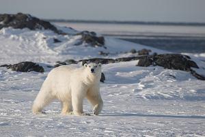 Polacy podbijają Arktykę