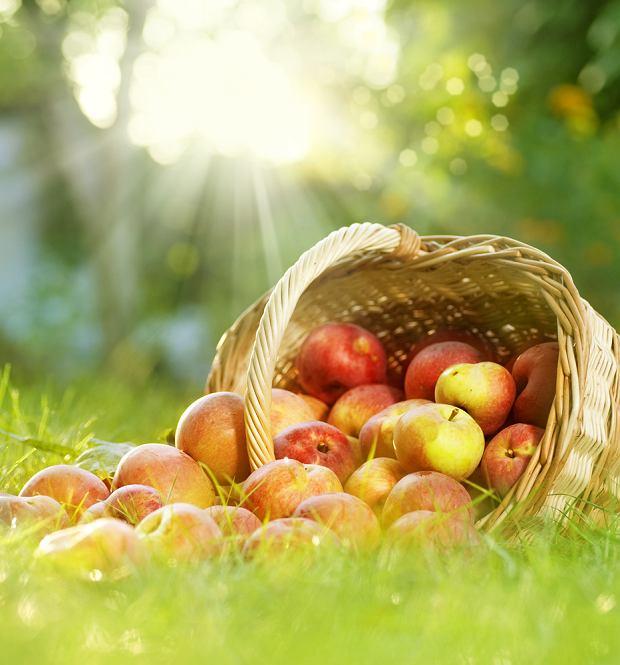 Sezon na owoce