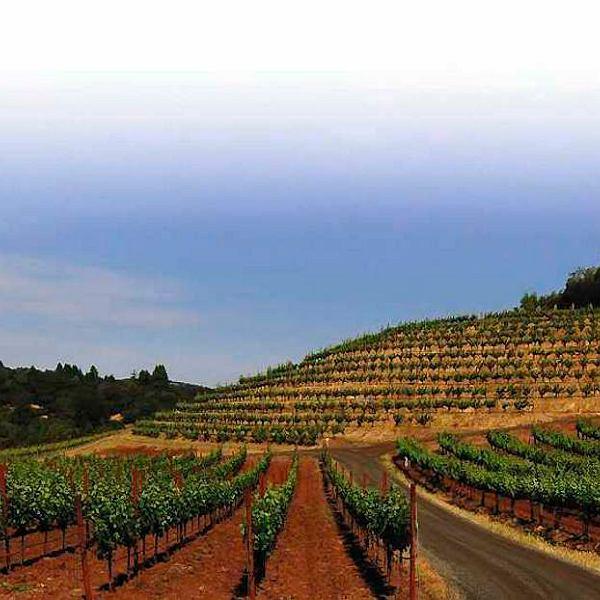 Autentyzm a la USA: biodynamiczne winnice w Sonoma County