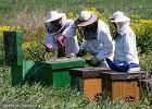 Od badania pszczo�y miodnej do w�asnego biznesu