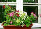 Po�ród wonnych kwiatów