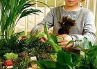 Zabawa wśród roślin