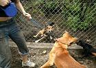 Pocz�tek wakacji - zn�w wyrzucaj� psy na ulic�