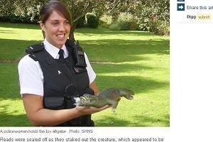 Aligator sieje postrach na ulicach Bristolu
