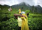 Herbata, czyli smaczny spos�b na zdrowie