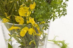 Roślinne estrogeny