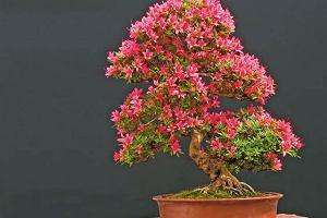 Rośliny na bonsai do mieszkań: