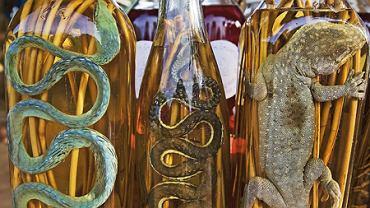 """Ze śliny, węża i robaków: dziwne alkohole. Wódki egzotyczne z egzotycznym """"wsadem"""""""