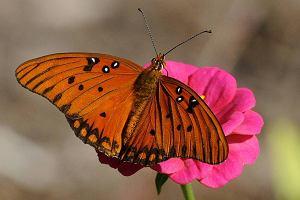 Motyle i banknoty