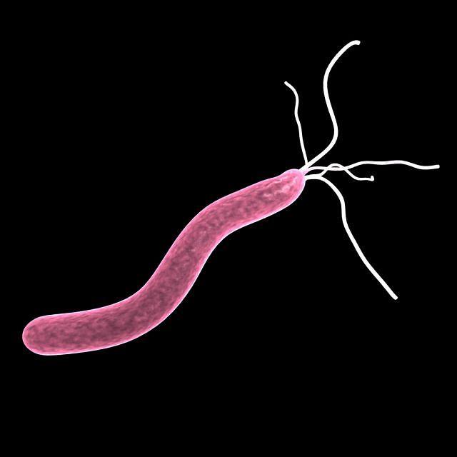 Helicobacter pylori to prawdziwy, najczęstszy sprawca choroby wrzodowej. Pokonają go antybiotyki