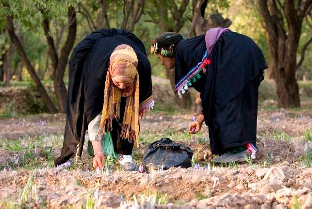 Maroko. Szafranowe złoto