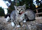 Wyrostki pobi�y kobiet�, bo karmi�a bezpa�skie koty