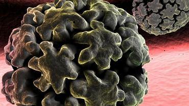Wirus brodawczaka ludzkiego