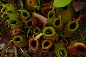 Borneo - w sercu dżungli