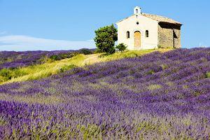 Prowansja - uroki po�udniowej Francji