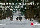 """Wilki wracaj� do Polski. Czytaj w pi�tek w """"Wyborczej"""""""