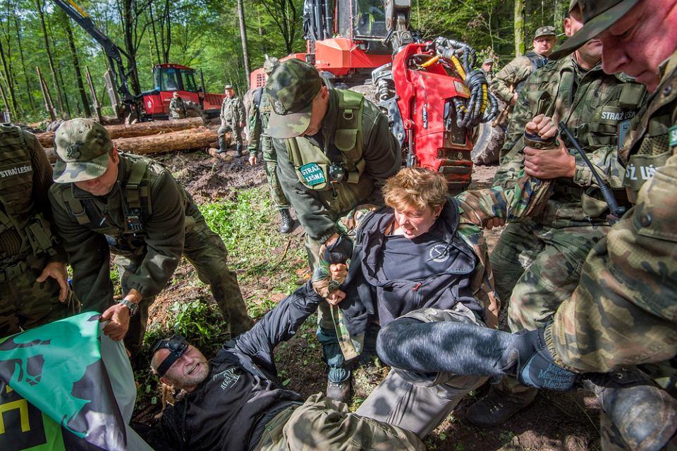 13 września 2017, Puszcza Białowieska, nadleśnictwo Białowieża. Interwencja Straży Leśnej podczas blokady wycinki przeprowadzonej przez Obóz dla Puszczy.