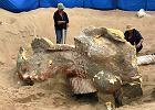 Duży fragment posagu sfinksa odkopany na wydmach w Kalifornii