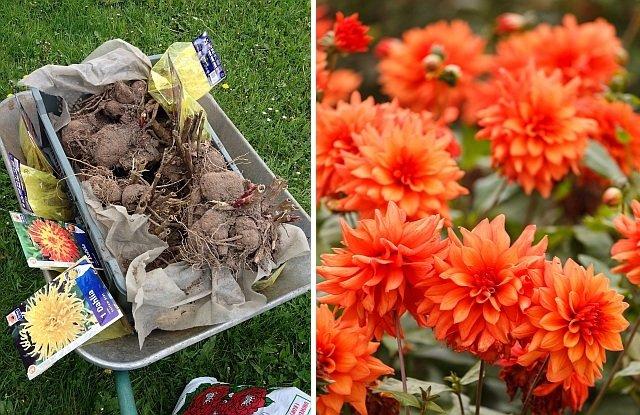 Znalezione obrazy dla zapytania sianie sadzenie