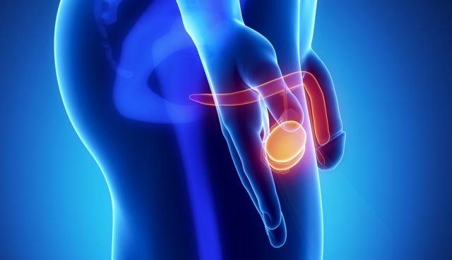 czy prostata ma wpływ na erekcje
