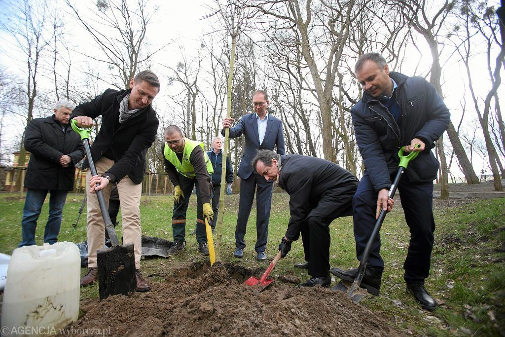 Akcja sadzenia drzew w Szczecinie