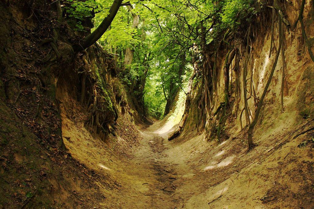 Wąwóz Świętej Królowej Jadwigi w Sandomierzu / Fot. Thorton, CC BY-SA 3.0