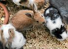 Pracownicy sieci sklepów zoologicznych: Zwierzęta są chore, zarobaczone, ze świerzbem. Wszystkie. Chomiki, świnki, króliki, kameleony, papugi...
