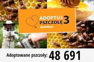 Adoptuj Pszczołę: Daliście radę! We wspólnej akcji Greenpeace i Gazeta.pl adoptowaliście prawie 50 tys. pszczół. W dwa dni!