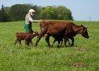 Niels Stokholm - kap�an z wid�ami. Zbuntowany farmer zmienia �wiat na przekór unijnym normom