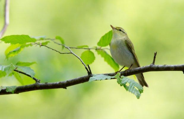 Znalezione obrazy dla zapytania ptaszek opowiada