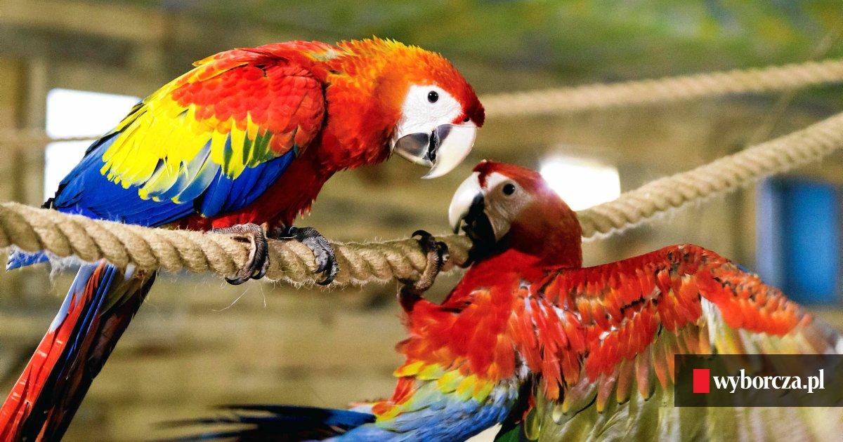 Papugarnia W Radomiu. Takiego Miejsca Jeszcze Nie Było
