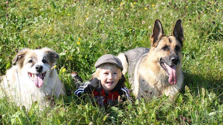 Psy pomagają w obniżeniu stresu u dzieci.