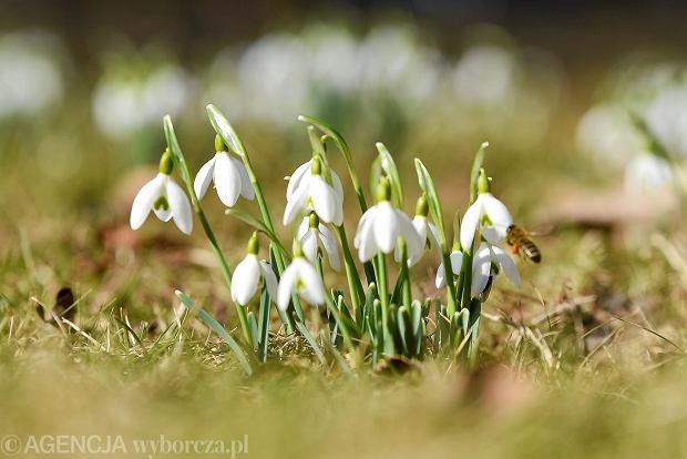 Pierwszy Dzień Wiosny 2018 Kalendarzowa Wiosna Rozpoczyna Się 21 Marca