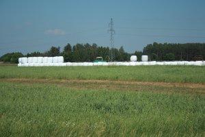Kandydatka PiS na premiera: Rolnictwo w ruinie. A fakty?