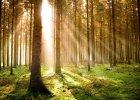 Minister Szyszko się myli. Gospodarka leśna w Europie... ociepla klimat