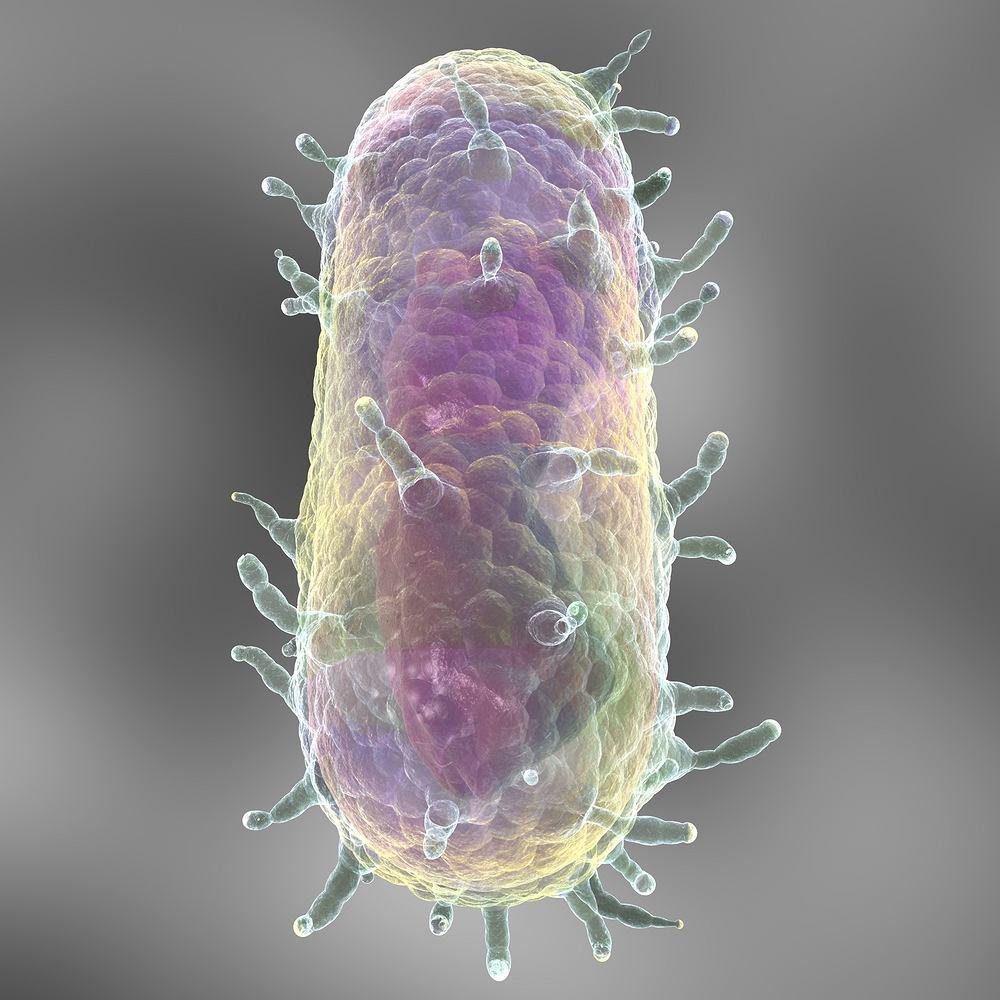 yersinia bakterie