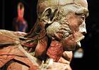 Prokuratura: wystawa Human Body zgodna z prawem