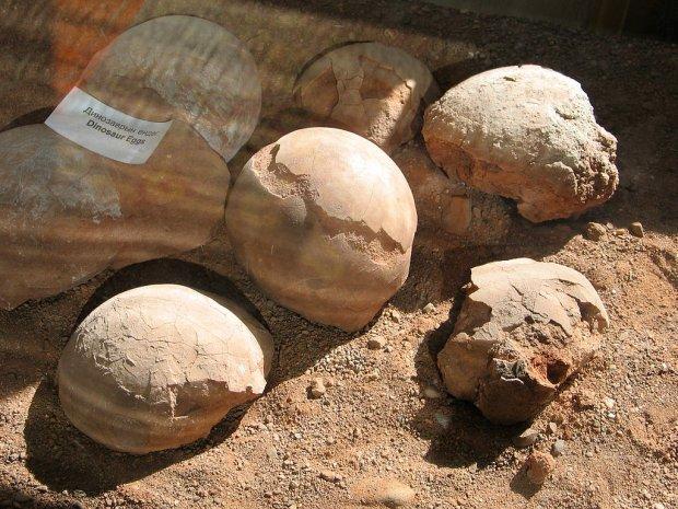 USA zwr�ci�y Mongolii skamieliny, w tym jaja dinozaur�w