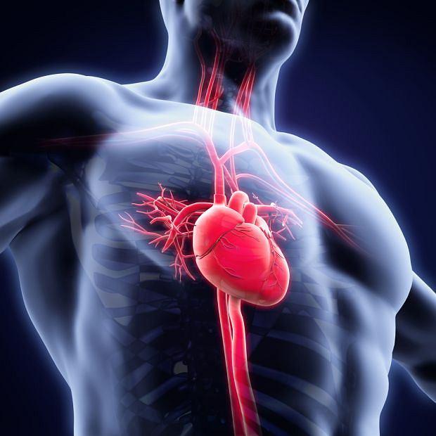 Ziarniniak Wegenera to jedno z kilkunastu schorzeń zaliczanych do tzw. układowego zapalenia naczyń. Choroby te charakteryzują się stanem, w którym białe krwinki atakują i uszkadzają naczynia krwionośne