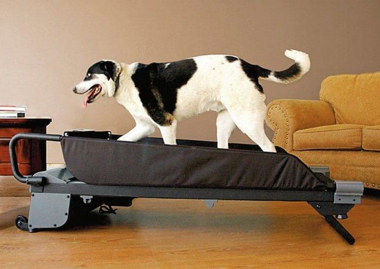 Psi fitness