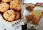 8 obowi�zkowych ciast do upieczenia tej jesieni + rude koty do podziwiania