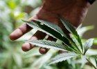 """Światowy raport o narkotykach. Co piąty polski piętnastolatek palił marihuanę. """"Wolą krajową trawkę niż import"""""""