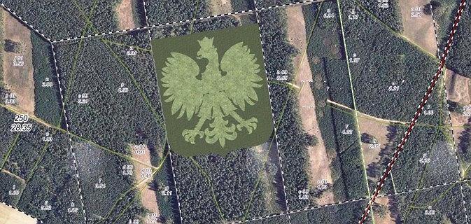 W środku lasu powstanie gigantyczny orzeł z drzew. Będzie miał 310 metrów szerokości